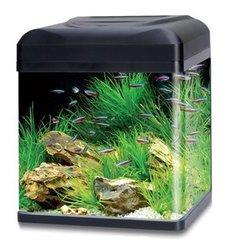 Plantenpakket Nano en Tico aquarium