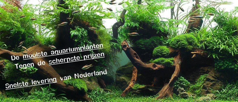 De snelste levering van Nederland!
